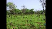 La nécessaire évolution des agricultures africaines, des réserves de productivité