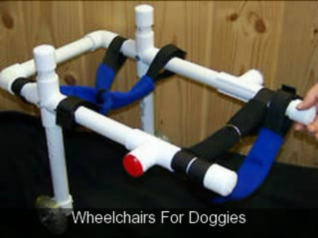 Wheelchairs For Your Doggie