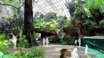 Le nom du zoo de Vincennes change t'il ? Les nouveaux tarifs, l'ouverture du Parc Zoologique de Paris Vincennes en avril 2014. Toutes les réponses avec Thomas Grenon