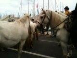Transhumance du 09 juin 2013 à Marseille