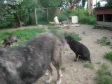 Dogs Ville Shelter