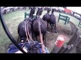 Gilles Moussu - Sandrigham 2013 - Obstacle 1 - Concours d'attelage à 4 poneys