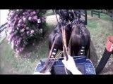 Gilles Moussu - Sandringham 2013 - Obstacle 8 - Concours d'attelage à 4 poneys