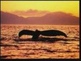 Evrim Teorisinin Çöküşü Yaratılış Gerçeği 4/8 www.harunyahya.org