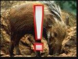 Evrim Teorisinin Çöküşü Yaratılış Gerçeği 8/8 www.harunyahya.org