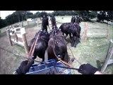Gilles Moussu - Sandringham 2013 - Obstacle 2 - Concours d'attelage à 4 poneys