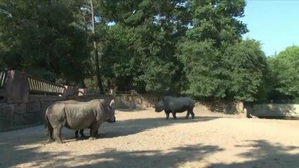 Mise en contact rhinos