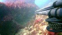 chasse sous marine sur épave