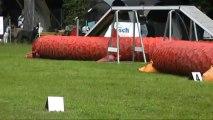 Sophie et Easy GPF Concours agility Sarreguemines 29/06/2013