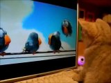 Compilation rigolo sur les chats