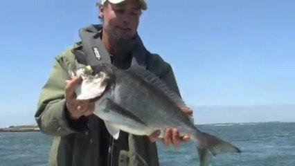 Sortie pêche à la Daurade Royale dans le Morbihan avec A Fun Fish