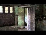 Reconstructing the houses of Srinagar