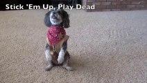 Les 45 choses que votre chien DOIT savoir faire !!! Le chien le mieux dressé et plus mignon du monde...