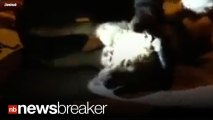 DOG RESCUED!: Firefighter Performs CPR on a Dog Rescued From a Burning Home, Dog Survives