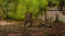 Morocco In Motion - Le Jardin Zoologique de Rabat, Maroc