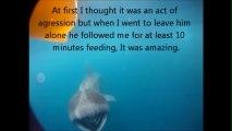 Basking shark swims with kayaker