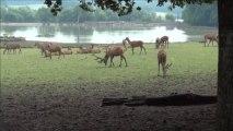 Parque selvagem tem novos moradores