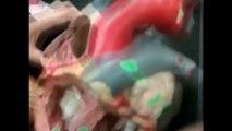 Human Anatomy 361 - Heart Model