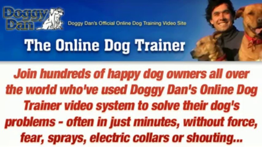 Dog Training In – The Online Dog Trainer