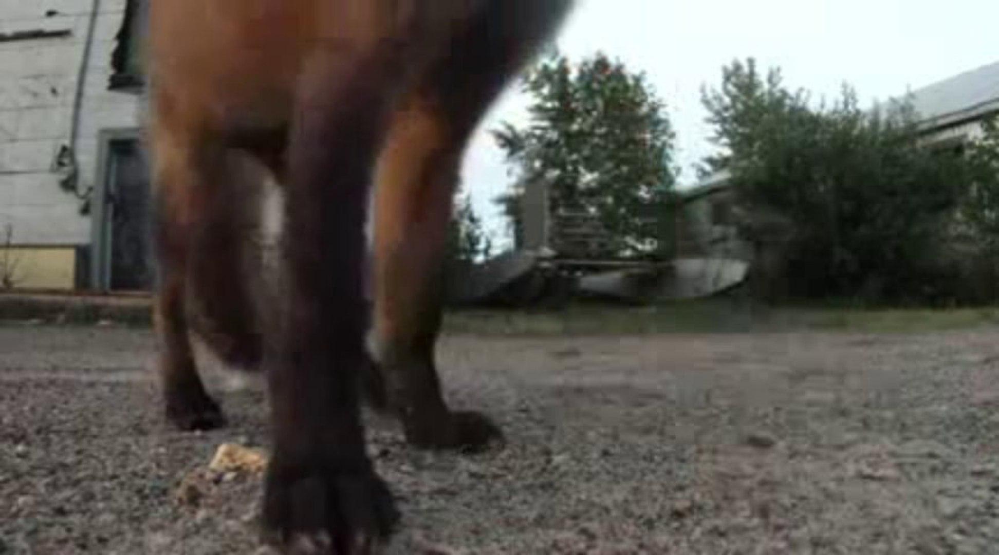 cute fox video