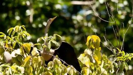 Tortuguero National parc