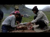 Porters dress goat in time for dinner, out on an alpine meadow