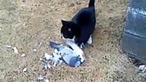 Pigeon Fakes Death To Escape