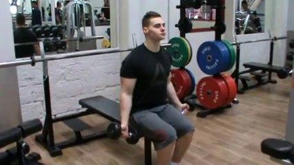 Biceps - curl aux haltères