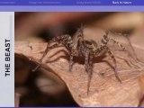 Colloque recherches bio-inspirées - Biomimétisme inspiré des plantes et des insectes (3/8)
