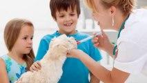 Wailea Spay Neuter & Puppies Shots Veterinary Clinic