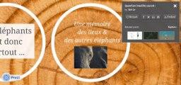La question insolite : la mémoire des éléphants est-elle un mythe ?