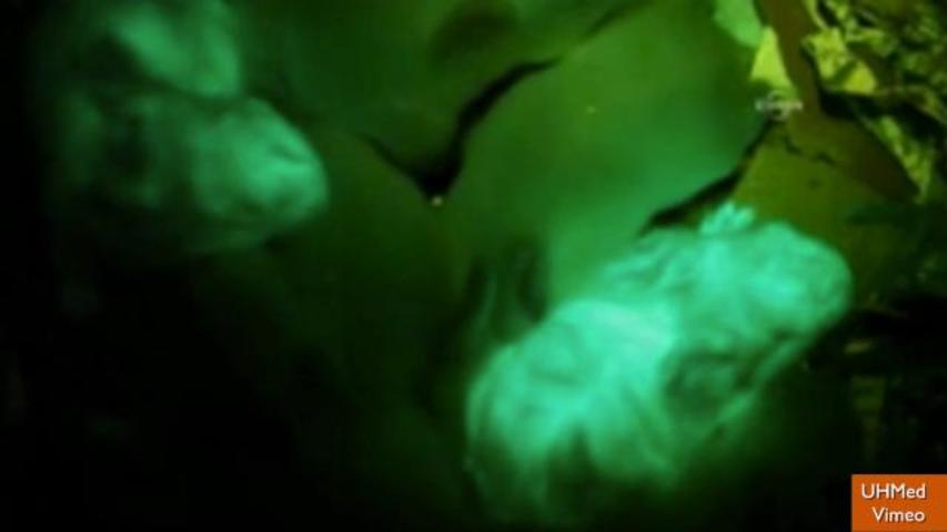 Scientists Create Glow-in-the-Dark Rabbits