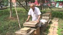 Bee sting therapy causing a buzz in China