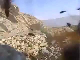 Des guêpes attaquent des marines US