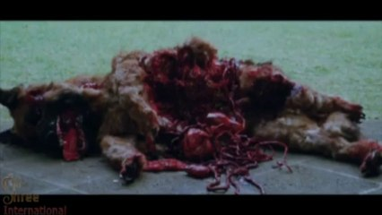 Brutal Dog ATTACK in the movie HELP
