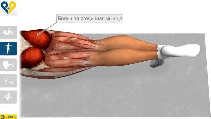 Leg Pull Down (Стабилизация с поднятием ноги)
