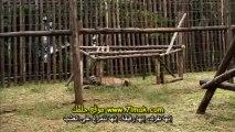 الفيلم الوثائقى حديقة ما قبل التاريخ الجزء الخامس