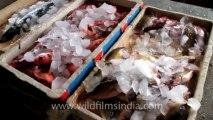 Indonesia-Bali-Fish Market-1