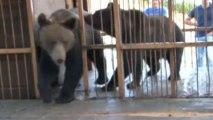 Deux ours sauvés des eaux