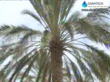 Underground irrigation of Date Palm trees using Buried Diffusers