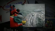 Gray Whales: Learn About Gray Whales with Baja's Whale Watching Tour Operator (562) 889-4016
