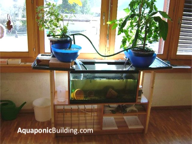 10 Indoor aquaponic systems