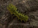 3069.Green Caterpillar
