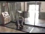 Humour Gag Video Rire Drole Traumajob