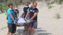 Delphin-Massensterben an der US-Ostküste