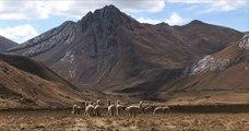 Randonnée dans la cordillère des Andes au Pérou