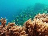 Snorkeling in Zanzibar. Island Mnemba. Tanzania. GoPro Hero 2.