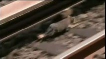 Deux chats bloquent le métro new-yorkais