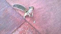 Putain d'écureuil !