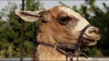 Le Lama de Villeurbanne - Bande annonce Mois du film documentaire 2013